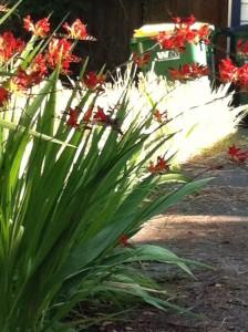 Hummingbird in my garden.