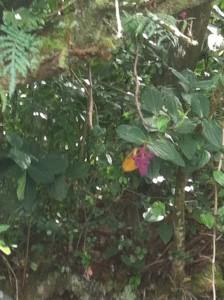 Random Flora, Maui