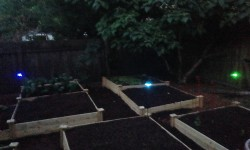 Solar Lights In The Garden